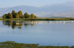 Agamon Hula Valley