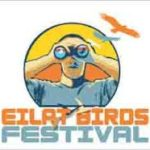 Grab your binoculars and cameras, it's the annual Eilat Bird Festival!