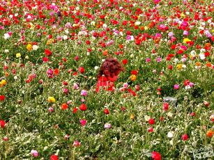 Flower Picking in Israel