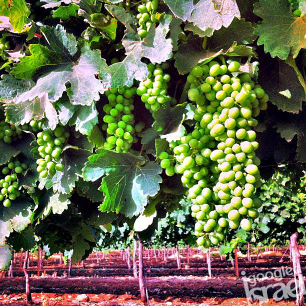 negev winery