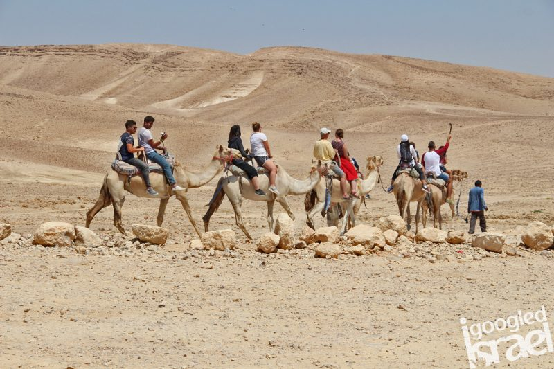 camel ride israel