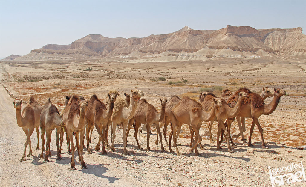 desert hiking tour israel